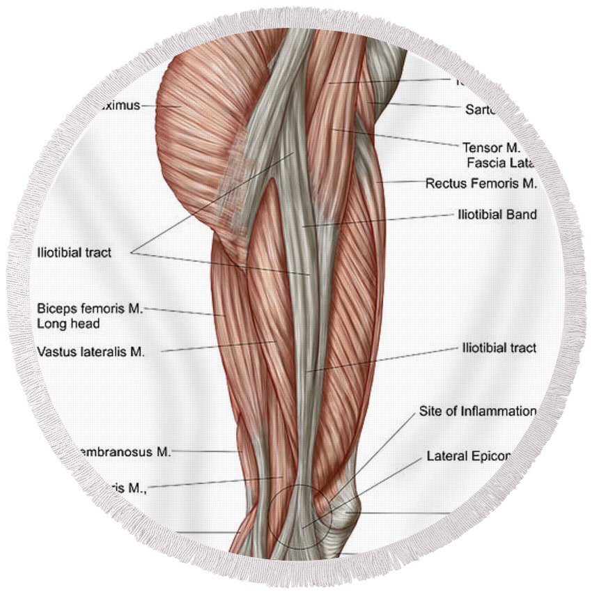 Anatomy Of Human Thigh Muscles Round Beach Towel for Sale by ...