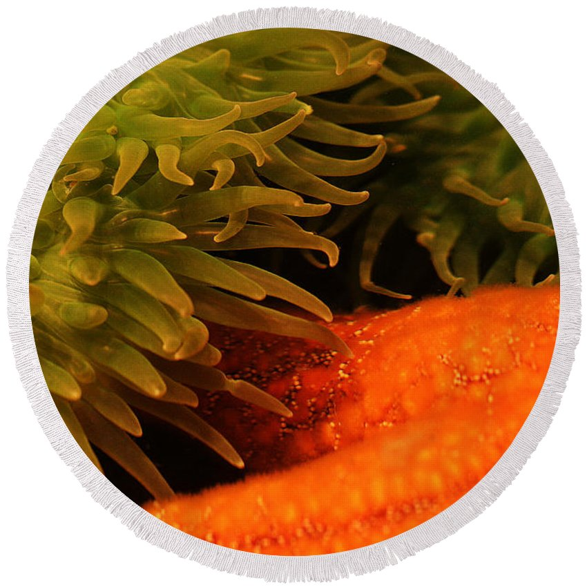 Anenome Round Beach Towel featuring the photograph Anenome And Starfish by Robert Woodward