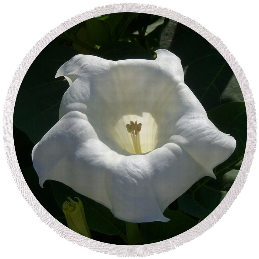 Angel's Trumpet Round Beach Towel featuring the photograph Angel Glow by Terri Waselchuk