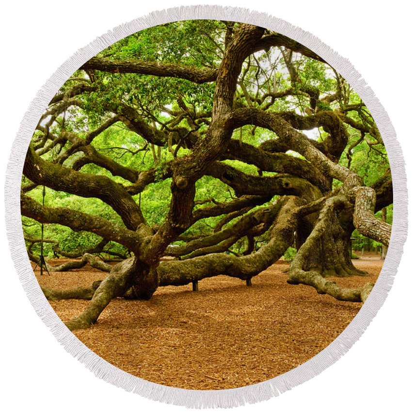 Nature Round Beach Towel featuring the photograph Angel Oak Tree Branches by Louis Dallara