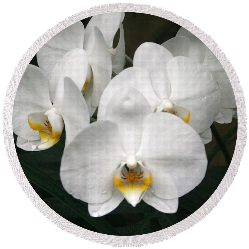 White Moth Orchids Round Beach Towel featuring the photograph Angelic Delight by Julie Ketchman