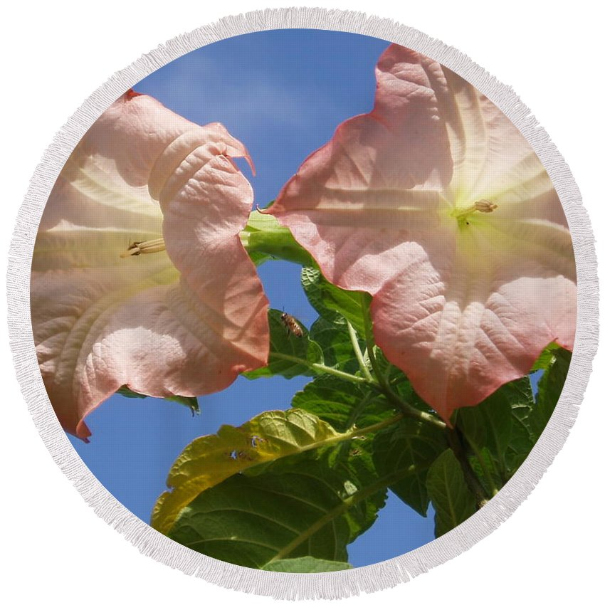 Flowers Round Beach Towel featuring the photograph Angel's Trumpet by Cheryl Cutler