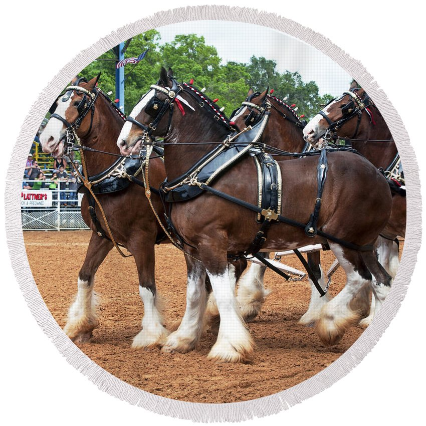 Anheuser-busch Round Beach Towel featuring the photograph Anheuser Busch Budweiser Clydesdale Horses In Harness Usa Rodeo by Sally Rockefeller
