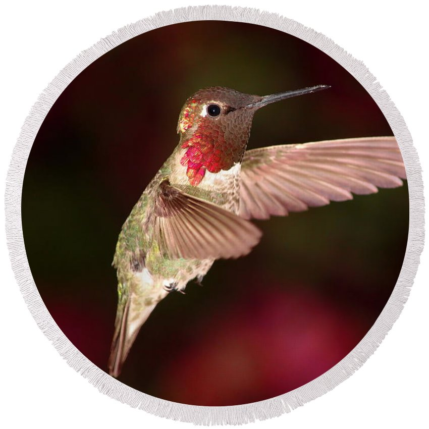 Animal Round Beach Towel featuring the photograph Anna's Hummingbird And The Roses by Ron D Johnson