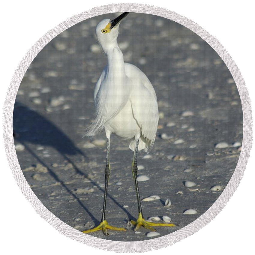 Snowy Egret Round Beach Towel featuring the photograph Another Flying Fish by Christiane Schulze Art And Photography