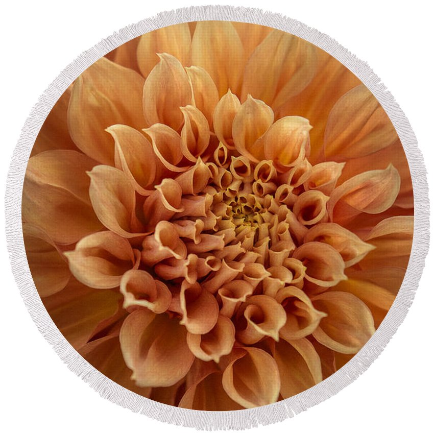 Dahlia Round Beach Towel featuring the photograph Apricot Dahlia by Joan Wallner