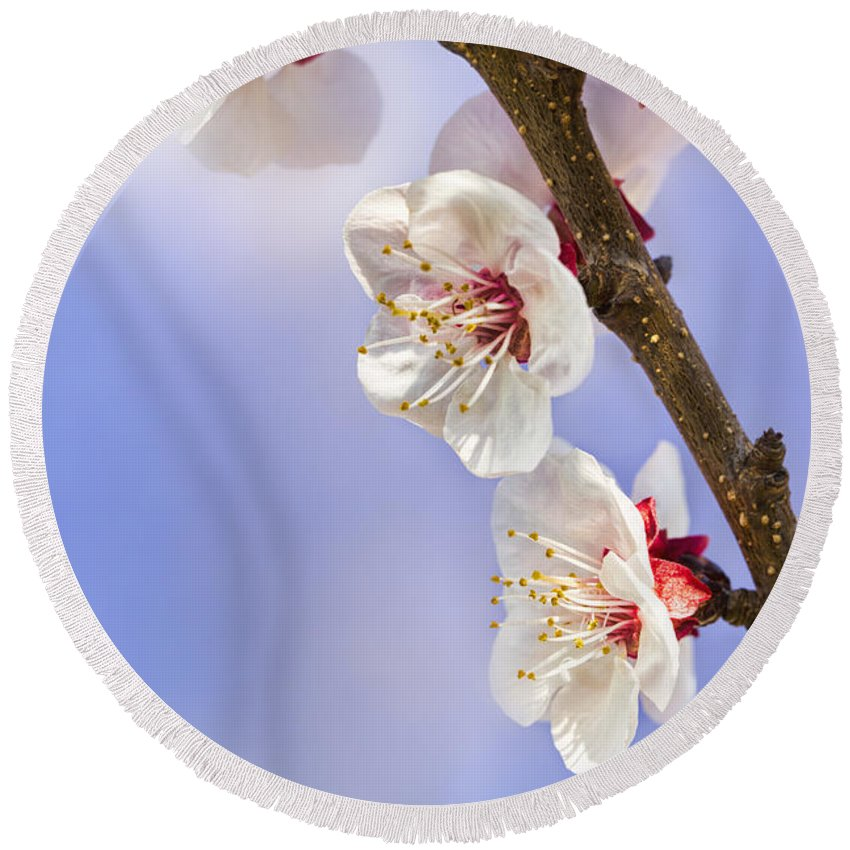Apricot Round Beach Towel featuring the photograph Apricot Flowers by Marc Garrido