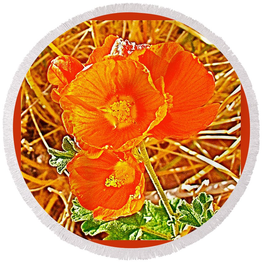 Apricot Globemallow In Vermilion Cliffs National Monument Round Beach Towel featuring the photograph Apricot Globemallow In Vermilion Cliffs National Monument-arizona by Ruth Hager