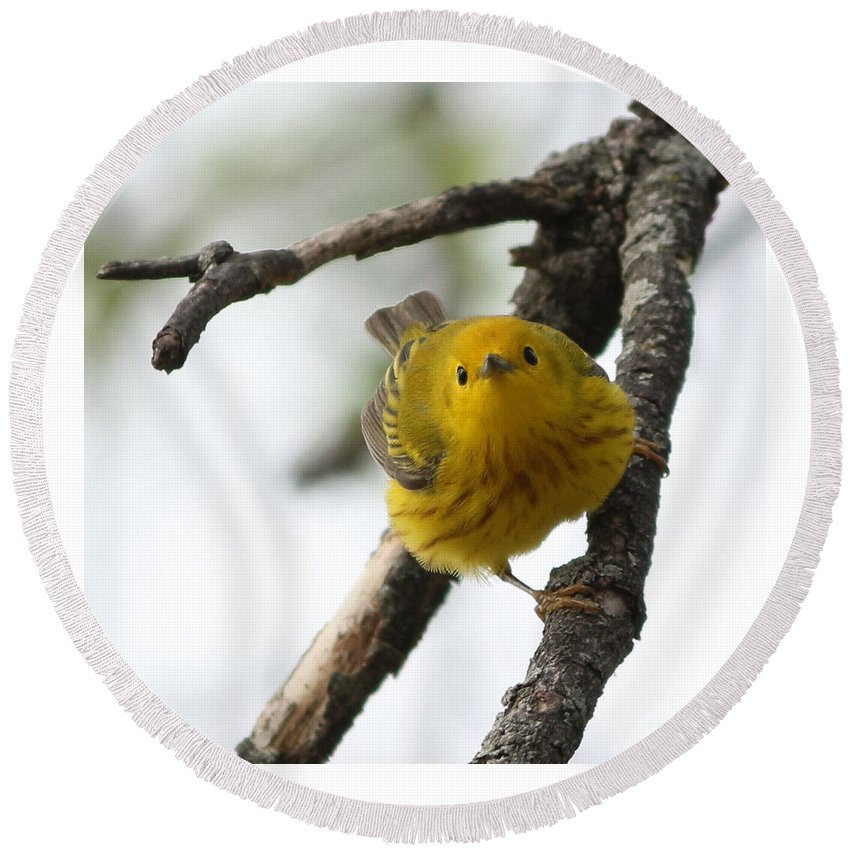 Yellow Warbler Round Beach Towel featuring the photograph Are You Watching Me by Lori Tordsen