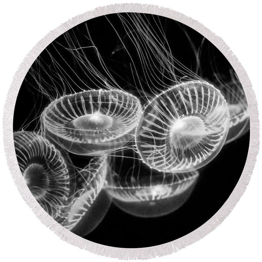 Moon Jelly; Aurelia Labiata; Jellyfish; Monterey Bay Aquarium; Jelly Fish; Sea Jelly; Cilia; Float; Swim; Round; Circular; Translucent; Cnidarian; Pacific Ocean; Tank; Glow; Medusa Round Beach Towel featuring the photograph Area 51 - Moon Jellies Aurelia Labiata by Jamie Pham