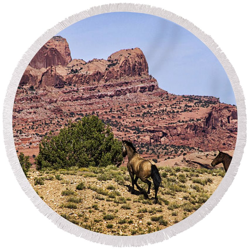 Horse Round Beach Towel featuring the photograph Arizona Beauties by Priscilla Burgers