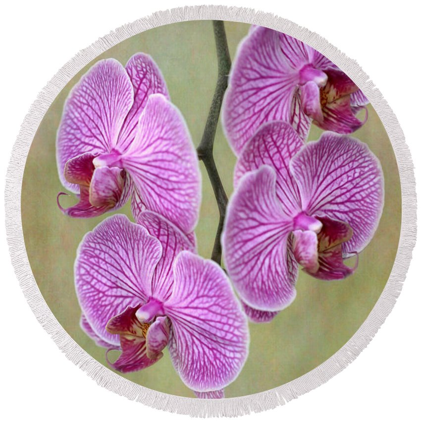 Amazing Round Beach Towel featuring the photograph Artsy Phalaenopsis Orchids by Sabrina L Ryan