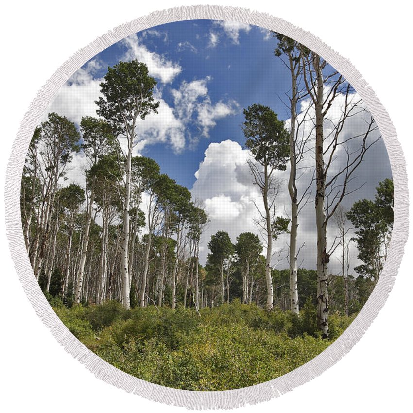 3scape Round Beach Towel featuring the photograph Aspen Grove by Adam Romanowicz