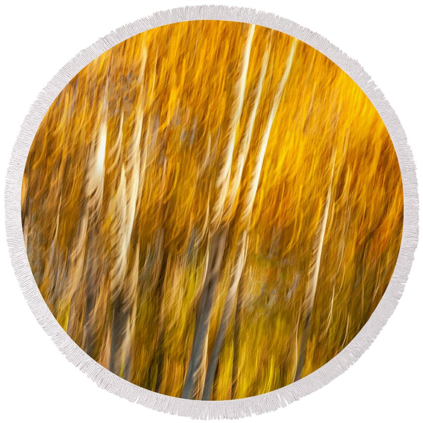 Ontario Round Beach Towel featuring the photograph Autumn Birches by Steve Harrington