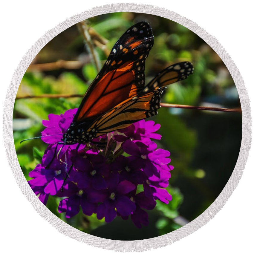 Butterfly Round Beach Towel featuring the photograph Autumn Butterfly by Sherman Perry