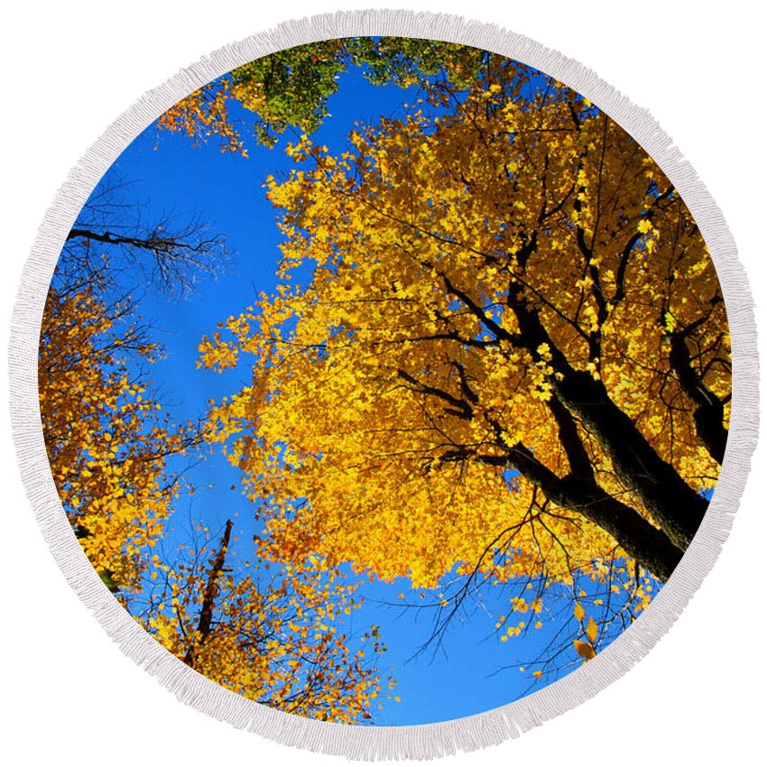 Tree Round Beach Towel featuring the photograph Autumn Color by Mark Prescott Crannell