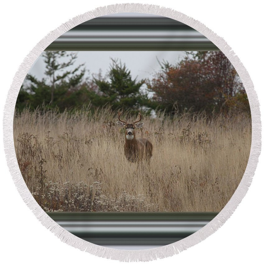 Buck Round Beach Towel featuring the photograph Autumn Deer by Marie Jamieson