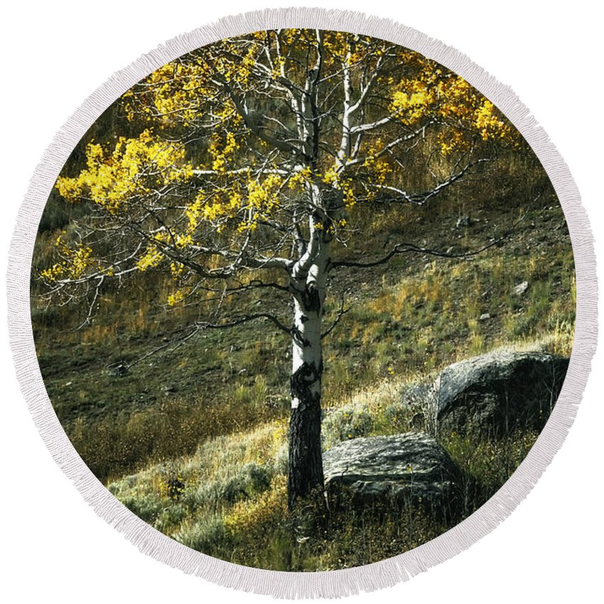 Aspen Round Beach Towel featuring the photograph Autumn Glow - Yellowstone by Belinda Greb