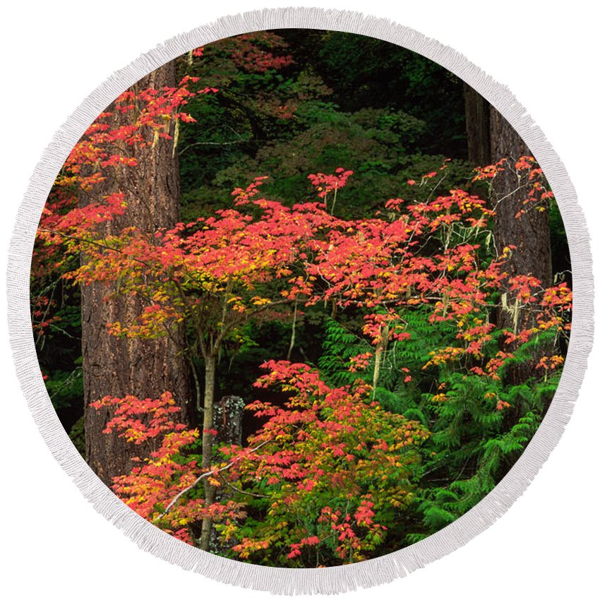 America Round Beach Towel featuring the photograph Autumn In Mount Rainier Forest by Inge Johnsson