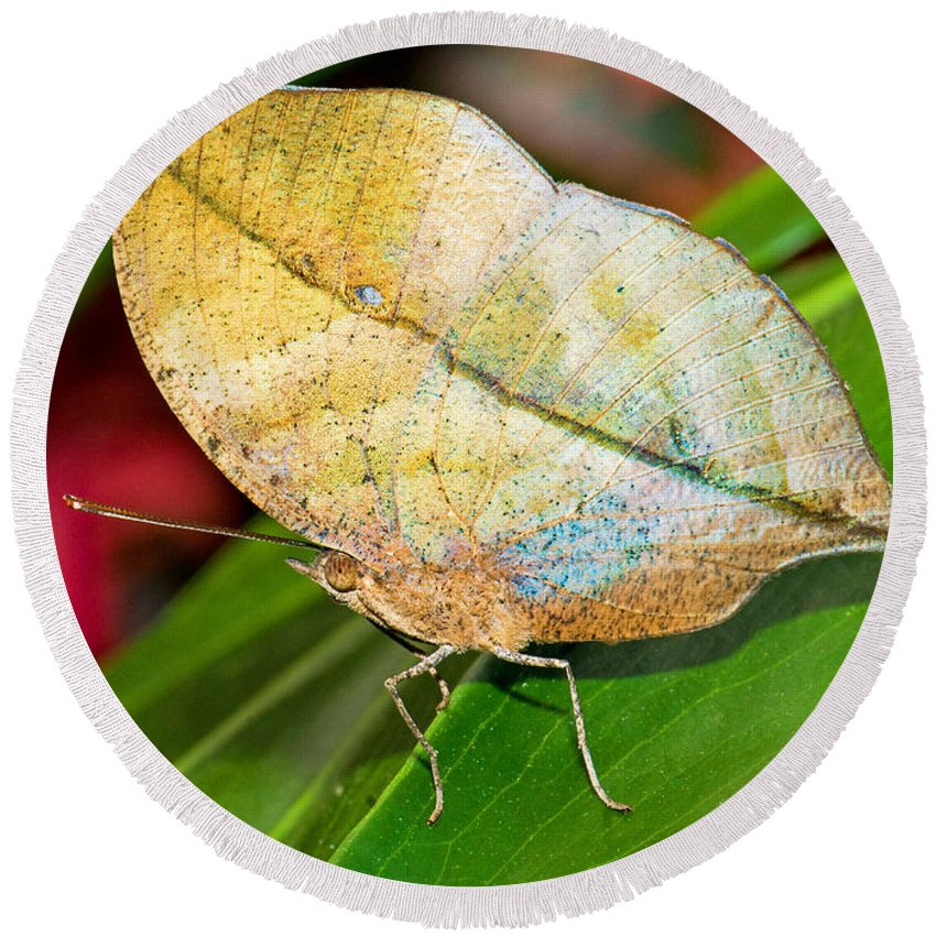 Nature Round Beach Towel featuring the photograph Autumn Leaf Butterfly by Millard H. Sharp