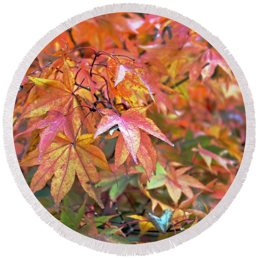 Flora Round Beach Towel featuring the photograph Autumn Leaves by Tony Murtagh