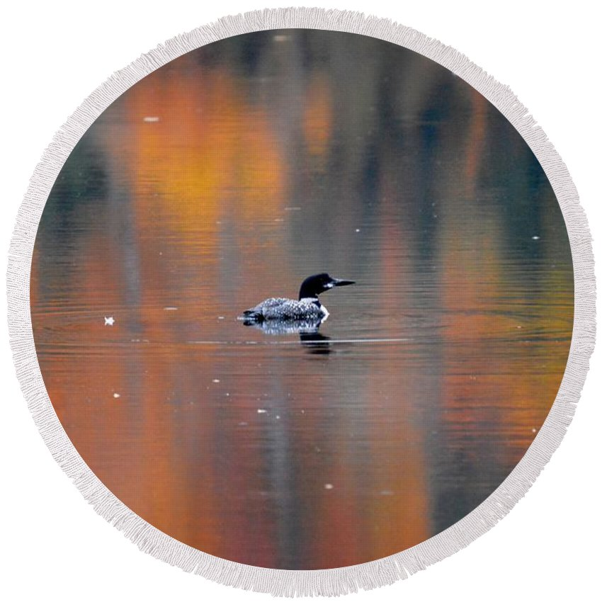 Loon Round Beach Towel featuring the photograph Autumn Loon by Thomas Phillips