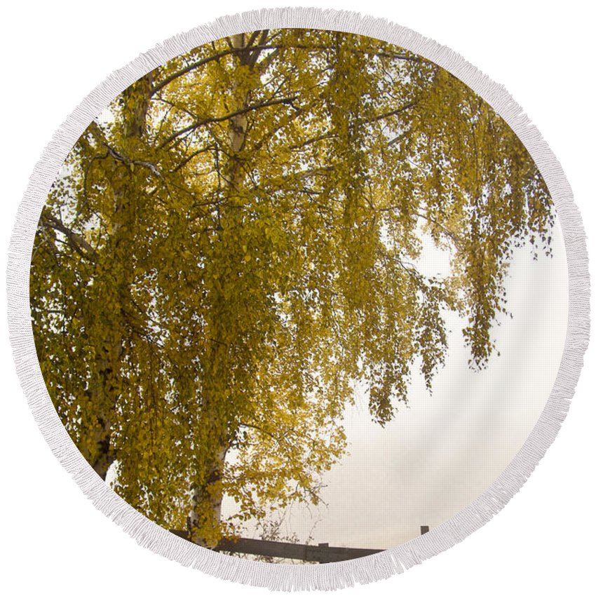 Tree Round Beach Towel featuring the photograph Autumn Morning by Heiko Koehrer-Wagner
