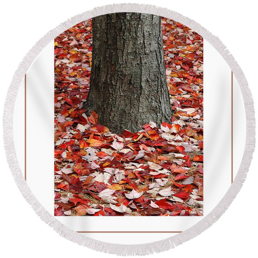 Autumn Round Beach Towel featuring the photograph Autumn Tree Poster by Mike Nellums