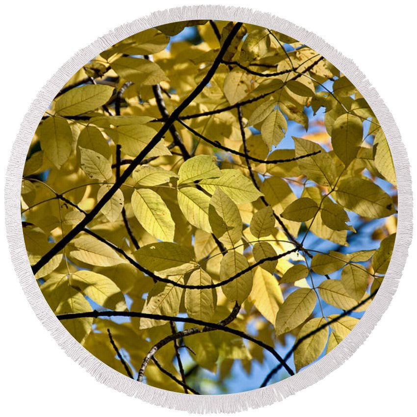 Round Beach Towel featuring the photograph Autumn Yellow by Cheryl Baxter