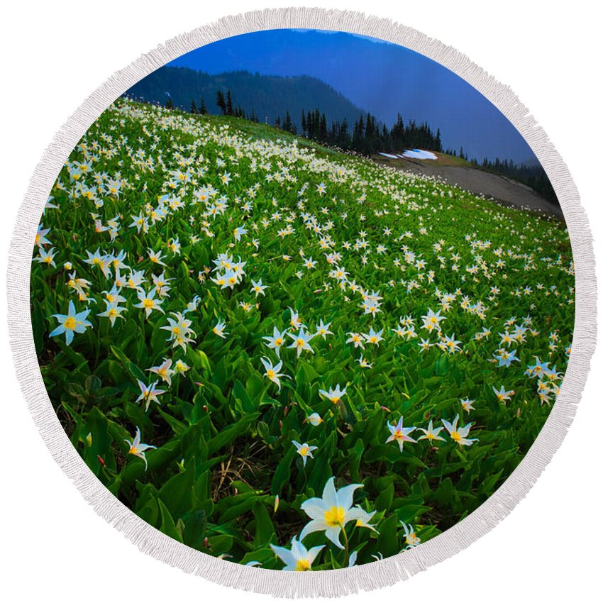 America Round Beach Towel featuring the photograph Avalanche Lily Field by Inge Johnsson