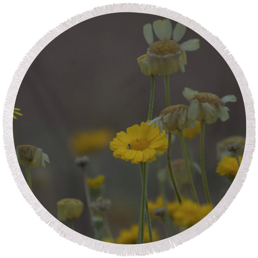 Flowers. Arizona Round Beach Towel featuring the photograph Az Flowers by Rod Wiens