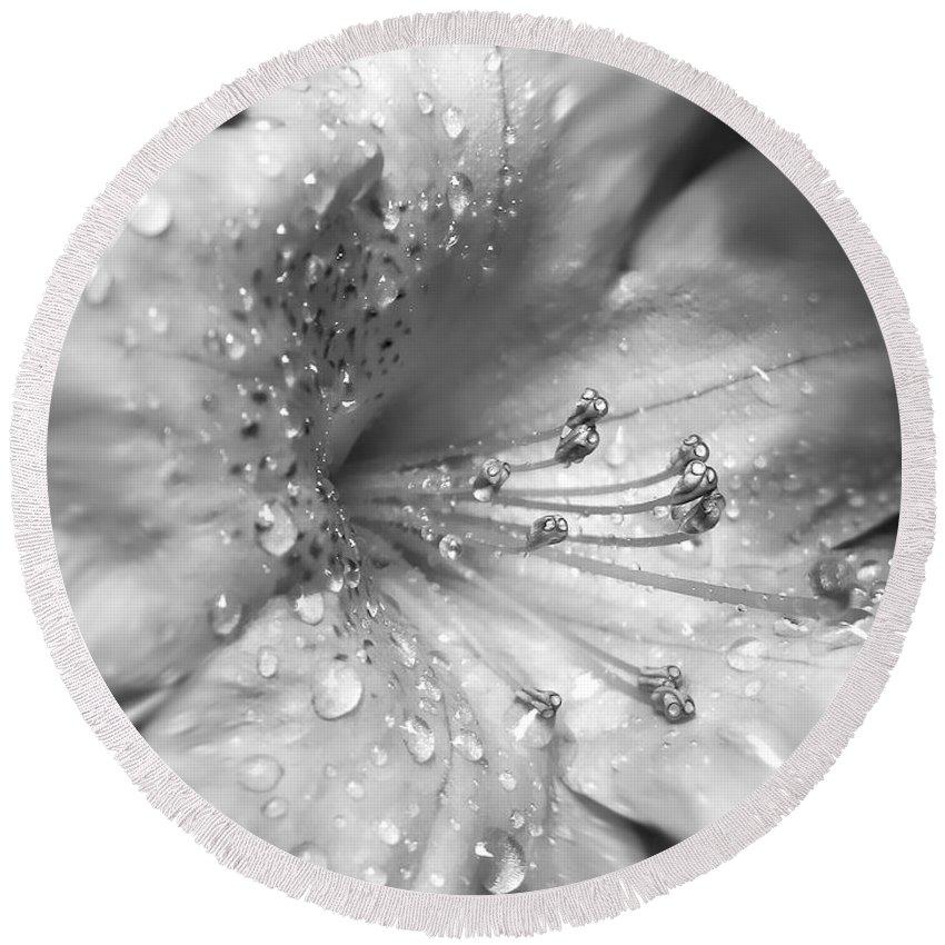 Azalea Round Beach Towel featuring the photograph Azalea Flower With Raindrops Monochrome by Jennie Marie Schell