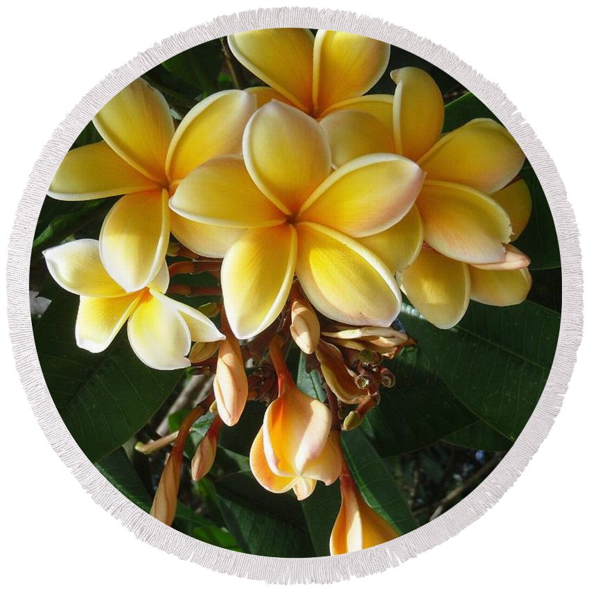 Aztec Gold Round Beach Towel featuring the photograph Aztec Gold Plumeria by Mary Deal