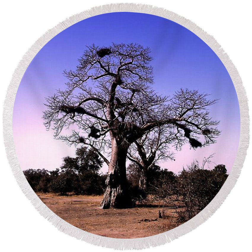 Baobab Tree Round Beach Towel featuring the photograph Babobab Tree by Martin Michael Pflaum