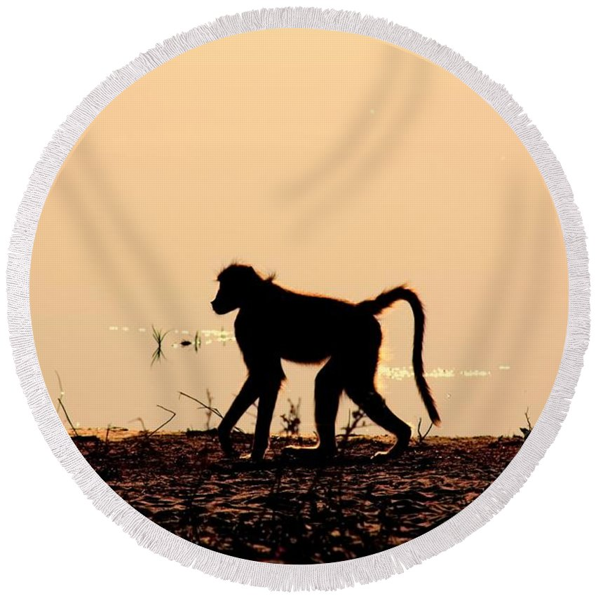 Baboon Sunset Round Beach Towel featuring the photograph Baboon Sunset by Amanda Stadther
