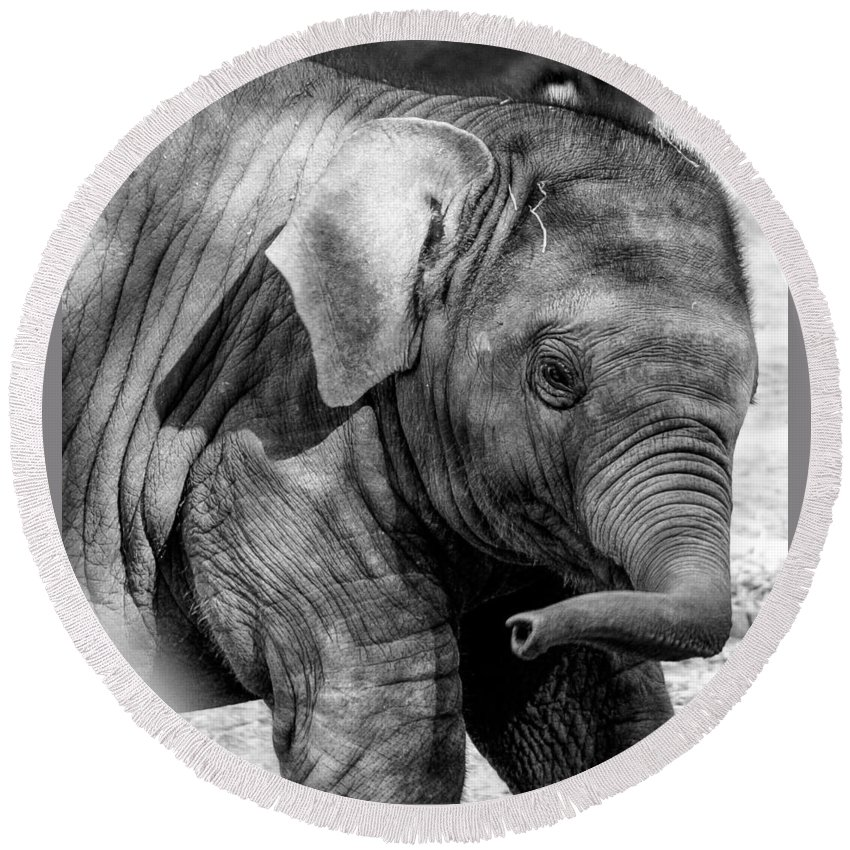 Elephant Round Beach Towel featuring the photograph Baby Elephant by Gaurav Singh