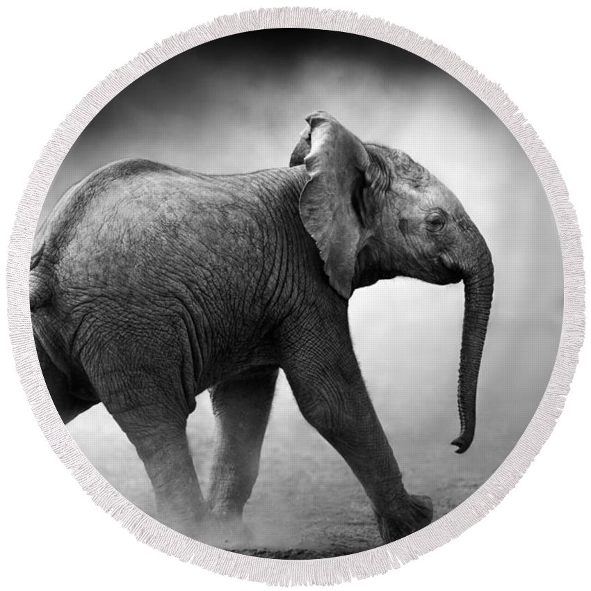 Elephant Round Beach Towel featuring the photograph Baby Elephant Running by Johan Swanepoel
