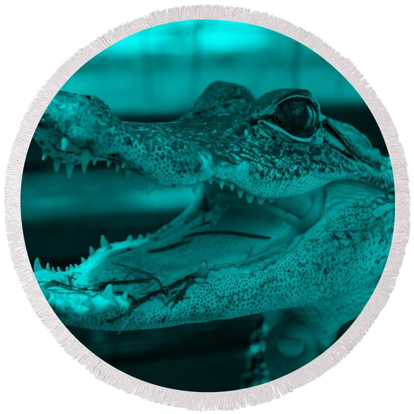Alligator Round Beach Towel featuring the photograph Baby Gator Turquoise by Rob Hans