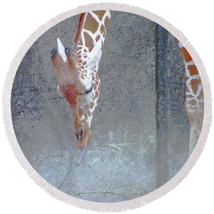 Giraffe Round Beach Towel featuring the digital art Baby Giraffe by Lizi Beard-Ward