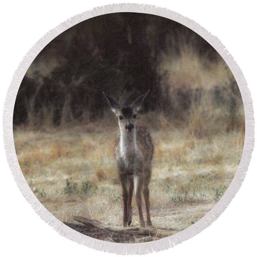 Fawn Round Beach Towel featuring the photograph Baby Soft by Donna Blackhall