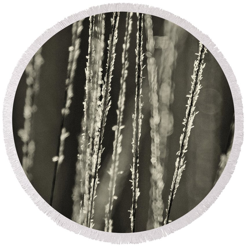 North America Round Beach Towel featuring the photograph Backlit Sepia Toned Wild Grasses In Black And White by Dave Welling