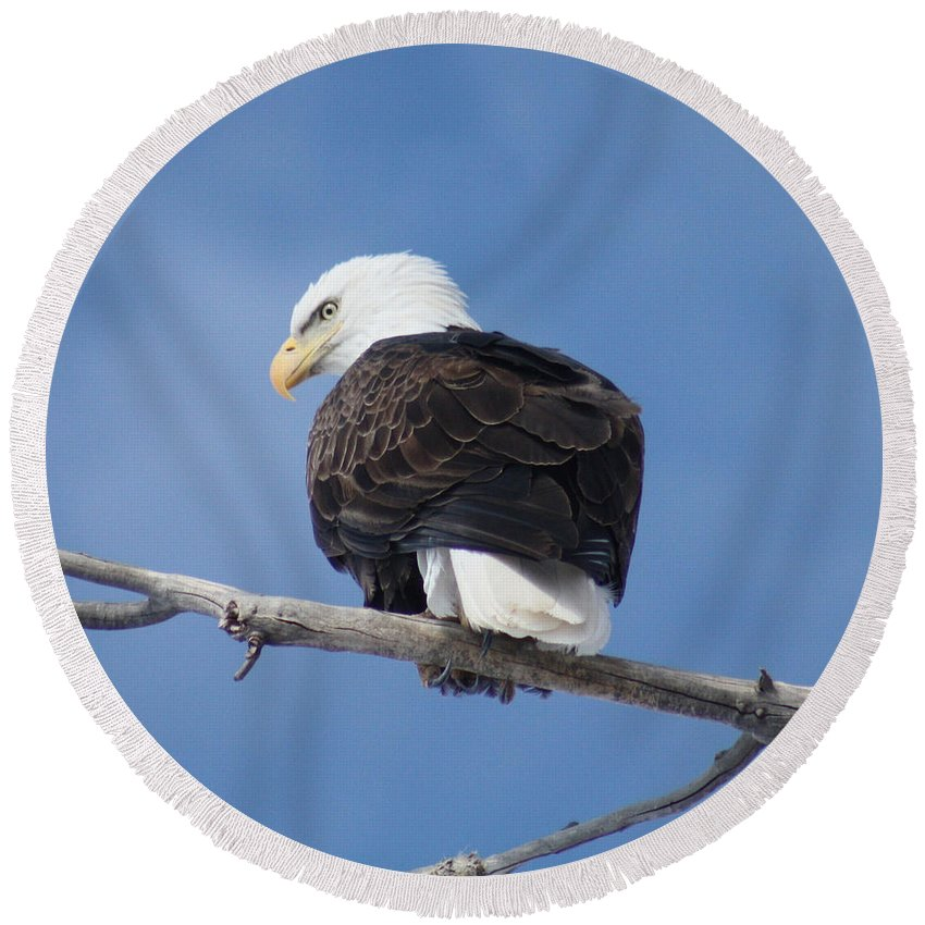 Bald Eagle Round Beach Towel featuring the photograph Bald Eagle by Brandi Maher