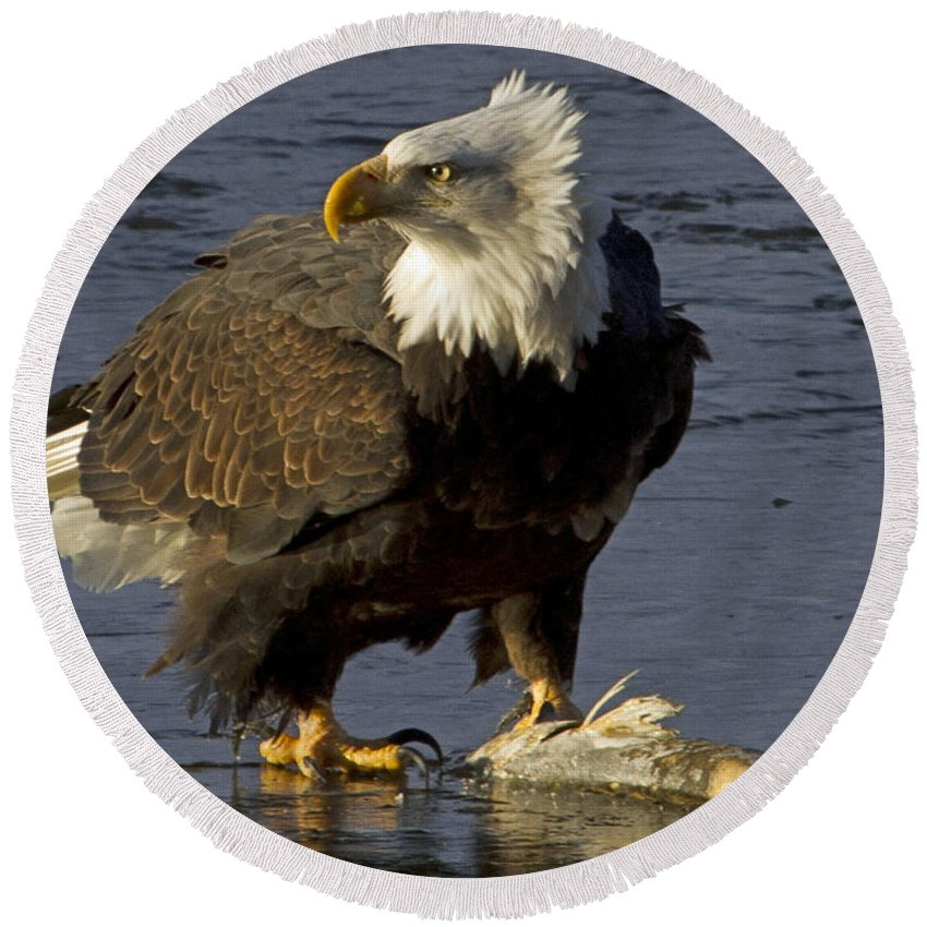 American Round Beach Towel featuring the photograph Bald Eagle by Dee Carpenter
