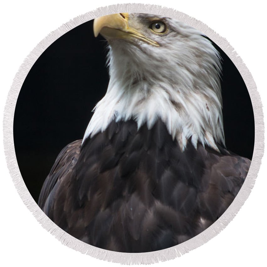 Bald Eagle Round Beach Towel featuring the photograph Bald Eagle by Gaurav Singh