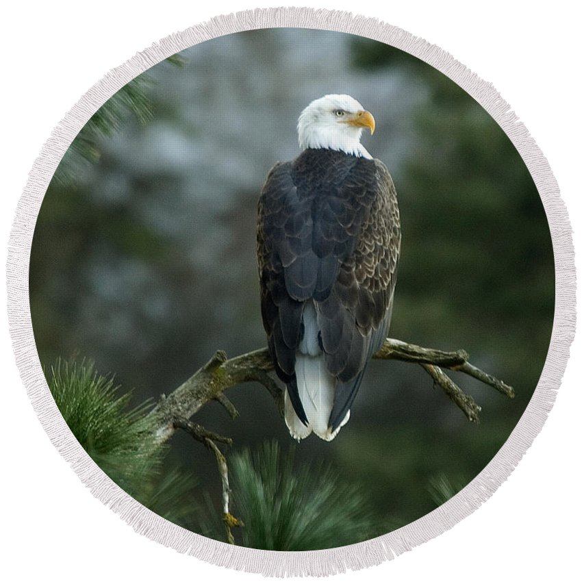 Bald Eagle Round Beach Towel featuring the photograph Bald Eagle In Tree by Paul DeRocker