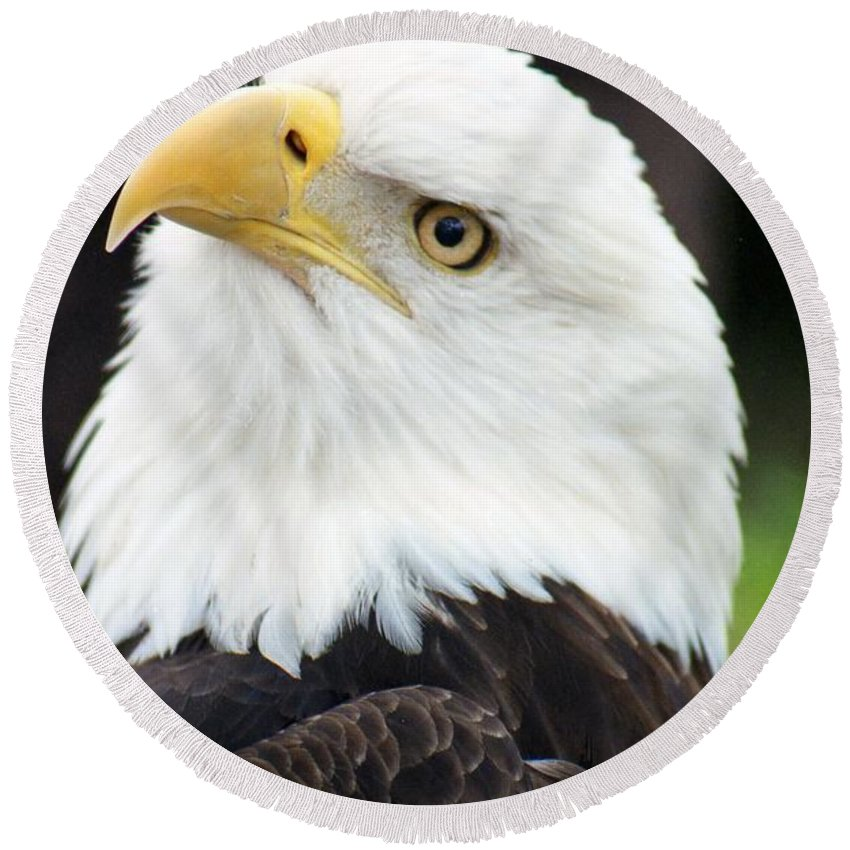 Bald Eagle Round Beach Towel featuring the photograph Bald Eagle - Power And Poise 01 by Pamela Critchlow