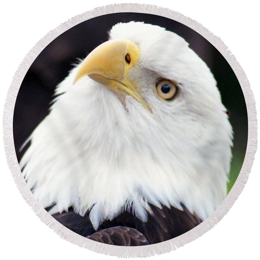 Bald Eagle Round Beach Towel featuring the photograph Bald Eagle - Power And Poise 03 by Pamela Critchlow