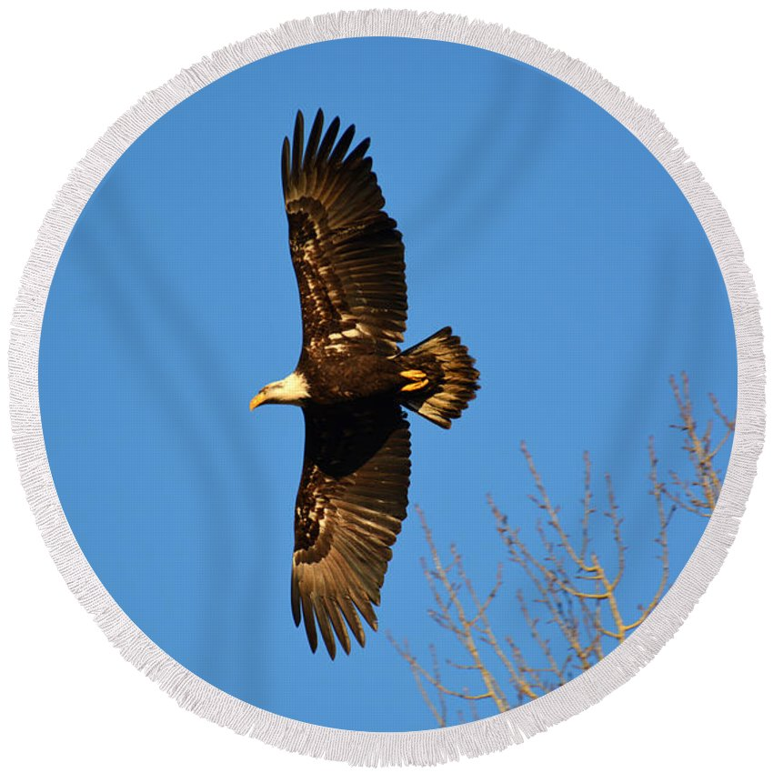 Bird Round Beach Towel featuring the photograph Bald Eagle Soaring Over Trees by Lena Photo Art