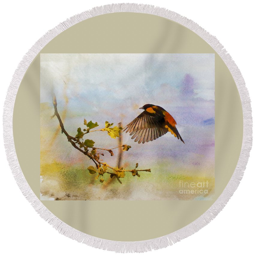 Baltimore Oriole Round Beach Towel featuring the photograph Baltimore Oriole Arrival by Kerri Farley
