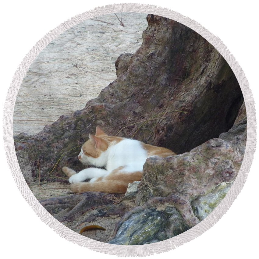 Barbados Round Beach Towel featuring the photograph Barbados Beach Cat by Diane Palmer